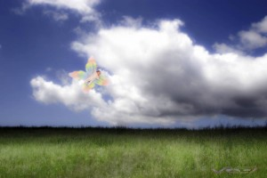 For this fantasy photo of baby butterfly over the grassy field I setup a portable green screen at the client's house. Model photography in O.c.